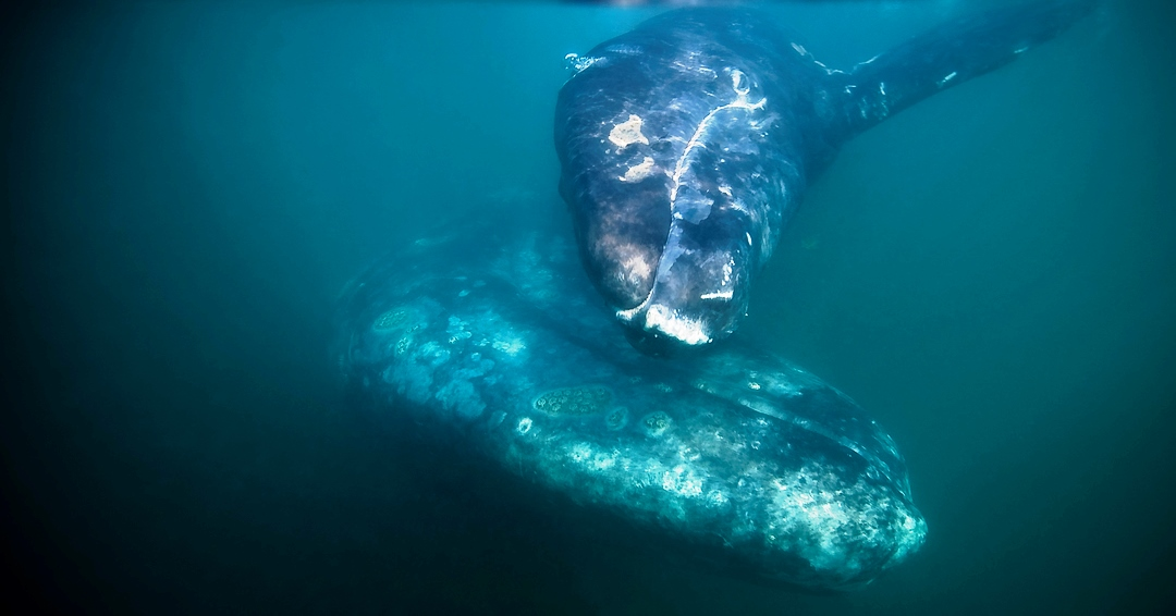 Blue Whale Watching Tours